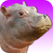Talking Hippo